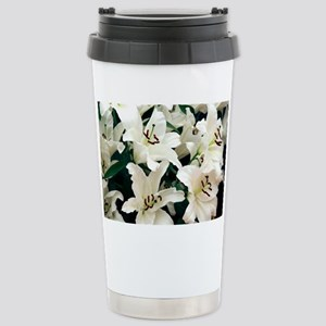 Oriental lily (Lilium 'Rialto') - Stainless Steel