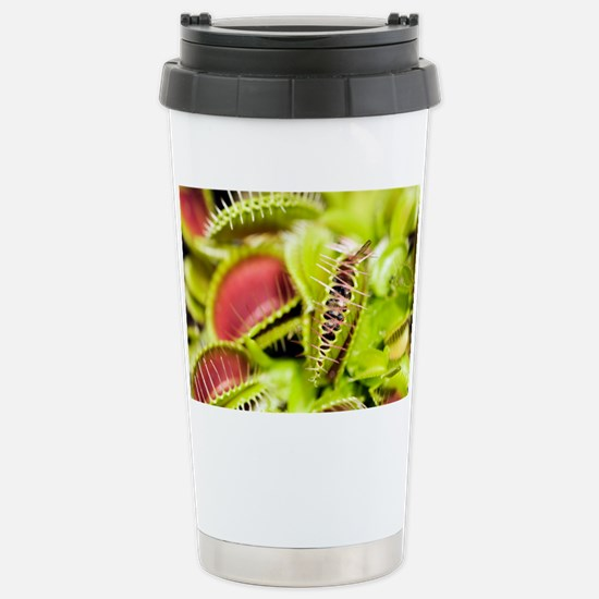Venus flytrap (Dionaea muscipula) - Stainless Stee