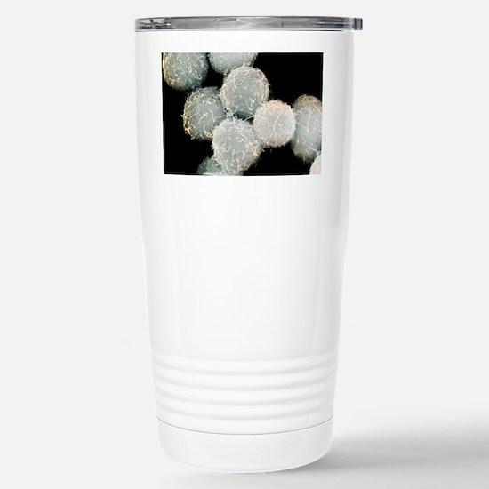 Stem cells, SEM - Stainless Steel Travel Mug