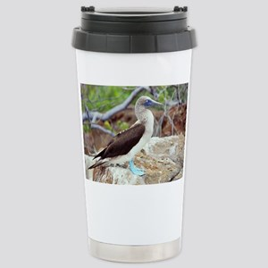 Blue-footed booby - Stainless Steel Travel Mug