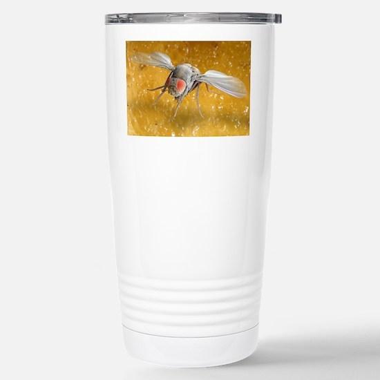 Fruit fly, SEM - Stainless Steel Travel Mug