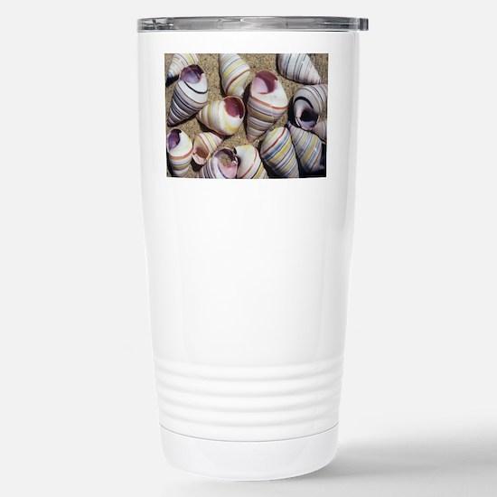 Freshwater snail shells - Stainless Steel Travel M