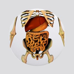 Abdominal organs, anatomical artwork - Round Ornam