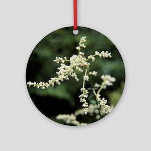 Artemisia flowers - Round Ornament