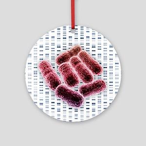 E coli bacteria, artwork - Round Ornament