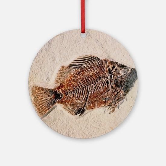 Fossilised fish, Priscacara serata - Round Ornamen