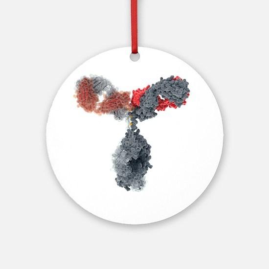 Immunoglobulin G antibody molecule - Round Ornamen
