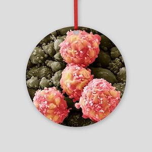 Foetal blood stem cells, SEM - Round Ornament