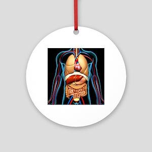 Human anatomy, artwork - Round Ornament