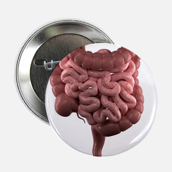 Healthy intestines, artwork - 2.25' Button (10 pac