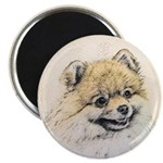 Pomeranian (Orange) Magnet