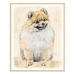Pomeranian (Orange) Small Poster