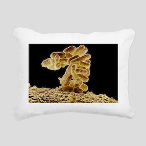 E. coli bacteria, SEM - Rectangular Canvas Pillow