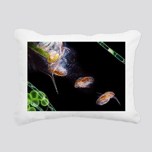 Water flea giving birth - Rectangular Canvas Pillo
