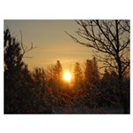 Sunrise in the Trees Wall Art