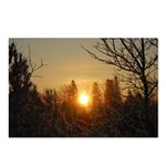 Sunrise in the Trees Postcards (Package of 8)