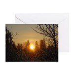 Sunrise in the Trees Greeting Cards (Pk of 10)