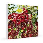 Large Pin Chokecherries Summer 2020 8x8 Canvas Pri