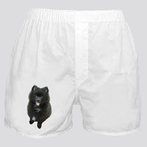 Adorable Black Pomeranian Puppy Dog Boxer Shorts