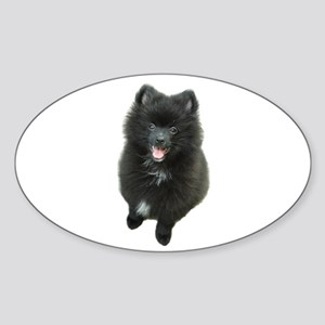 Adorable Black Pomeranian Puppy Dog Sticker (Oval)