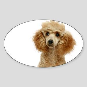 Apricot Poodle Puppy - Sticker (Oval)