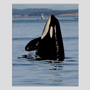 Spy Hopping Orca Small Poster