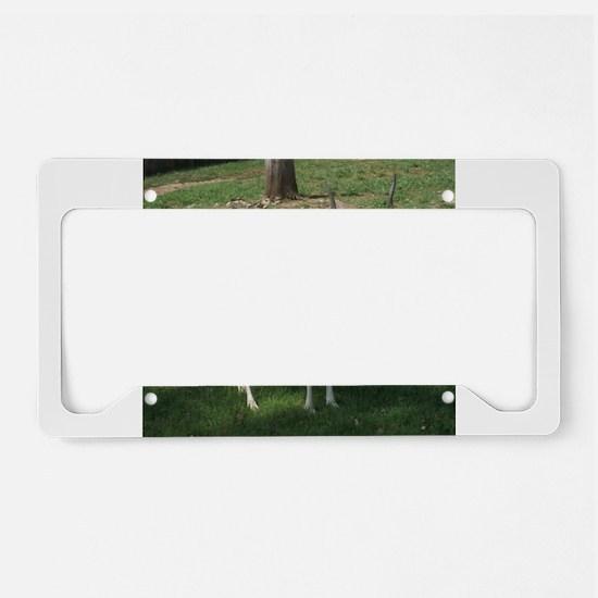 Gazelle License Plate Holder
