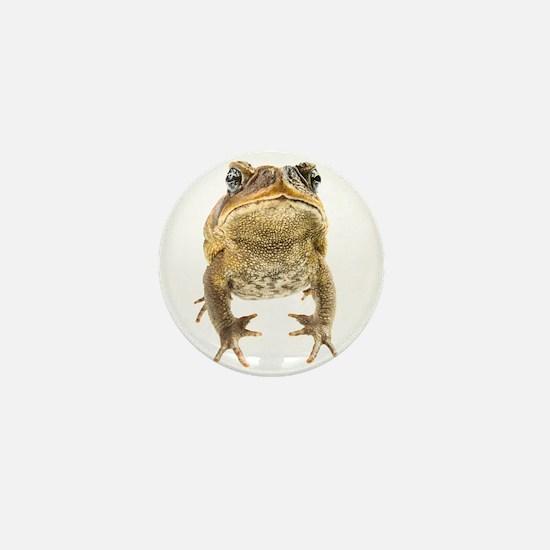 Cool Amphibian Mini Button