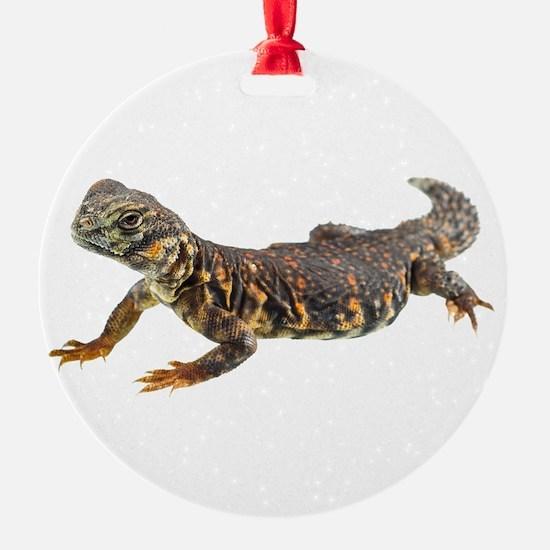 Uromastix Ornament