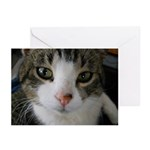 I See You Cat Greeting Cards (Pk of 10)