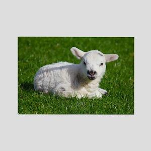 Baby lamb Rectangle Magnet