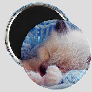 Sleeping Siamese Kitten Paws Magnet
