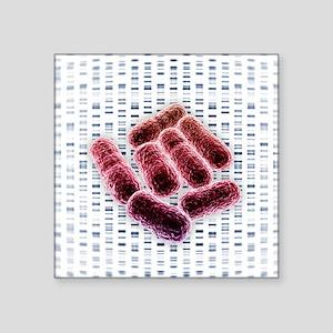 E coli bacteria, artwork - Square Sticker 3