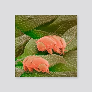 Water bears, SEM - Square Sticker 3