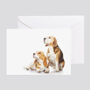 Two beagle dogs isolated on white background - Gre