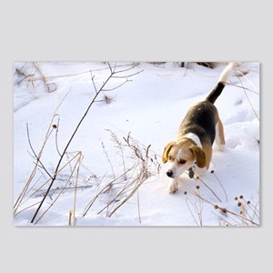 Beagle Hunting A Rabbit In The Snow - Postcards (P