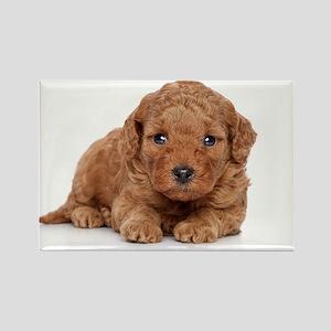Poodle Puppy Portrait - Rectangle Magnet