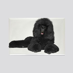 Black Poodle Lying - Rectangle Magnet