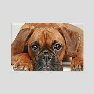 German Boxer dog - Rectangle Magnet