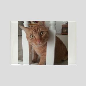 Banister Kitty Rectangle Magnet