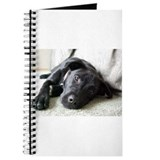 Labrador retrievers Journals & Spiral Notebooks
