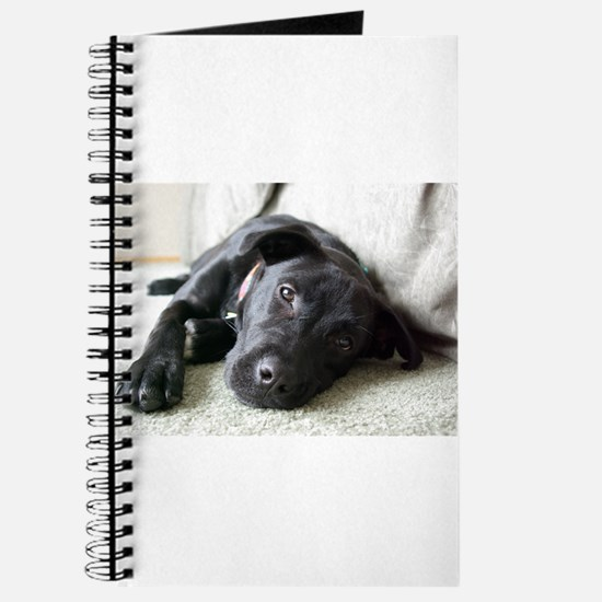 Cute Animal art Journal