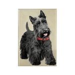 Scottish Terrier Rectangle Magnet (10 pack)
