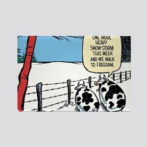 Snowbound Cattle Rectangle Magnet