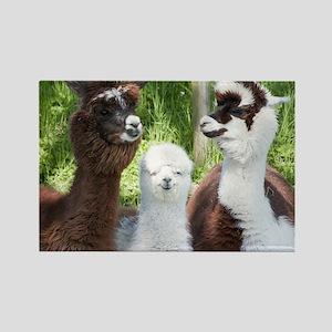 Three different alpacas - Rectangle Magnet