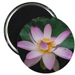 Pink Lotus Blossom Magnet