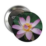 Pink Lotus Blossom Button