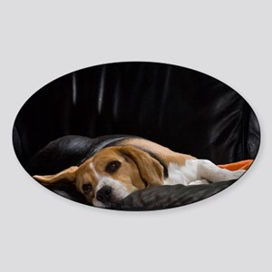 Lazy Beagle - Sticker (Oval)