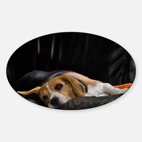Lazy Beagle - Sticker (Oval)