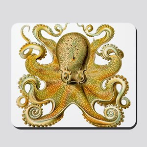 Vintage octopus cephalopod scientific drawing Mous